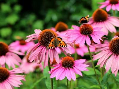 hastalıkların şifalı bitkileri, şifalı bitkiler listesi, şifalı bitkiler nelerdir, şifalı bitkiler ve faydaları, şifalı bitkiler ve isimleri, şifalı bitkiler eğitimi, şifalı bitkiler ve özellikleri, şifalı bitkiler resimli, şifalı bitkilerin faydaları, şifalı bitkilerin isimleri, şifalı bitkilerin özellikleri, şifalı bitkiler, yararlı bitkiler, sağlık,