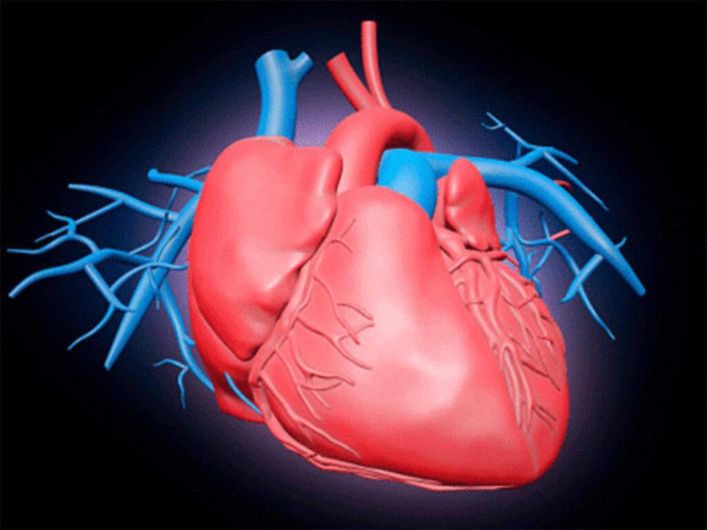 asetilkolin kalbe etkisi, asetilkolin kalp üzerine etkisi, asetilkolin kalp kası, asetilkolin kalbi nasıl etkiler, asetilkolin kalp, asetilkolin kalp atışını hızlandırır mı, asetilkolin kalbi hızlandırır mı, aseltikolin nedir,
